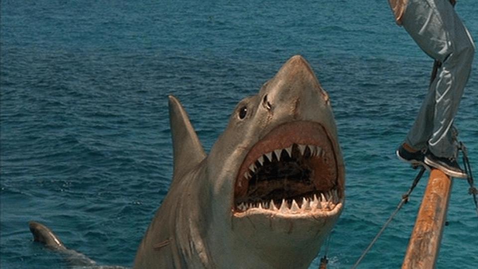 Jaws: The Revenge 1